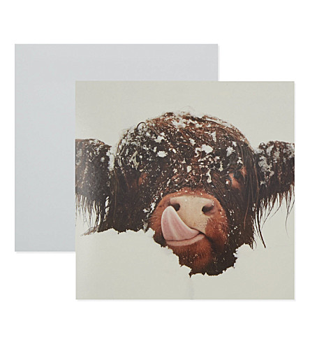 THE GREAT BRITISH CARD COMPANY - Snow Cow Christmas cards 8 packs ...