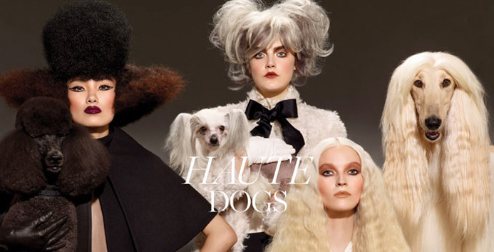 Mac - Haute Dogs