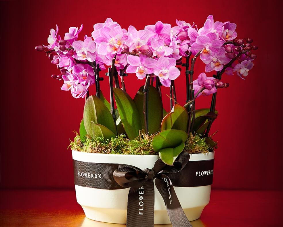 Flowerbx mini orchid planter