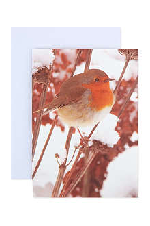 THE GREAT BRITISH CARD COMPANY 12 Christmas cards