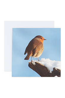 THE GREAT BRITISH CARD COMPANY Snowy Robins cards