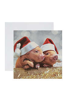 THE GREAT BRITISH CARD COMPANY Micro Pigs cards