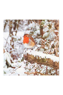 CHRISTMAS Robin on Branch Christmas cards pack of 12