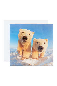 THE GREAT BRITISH CARD COMPANY Polar Bear cards