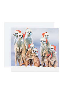 THE GREAT BRITISH CARD COMPANY Meercat cards