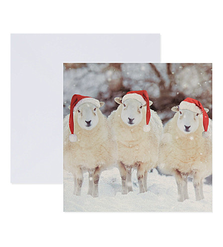 THE GREAT BRITISH CARD COMPANY Three wise ewes Christmas cards 16-pack