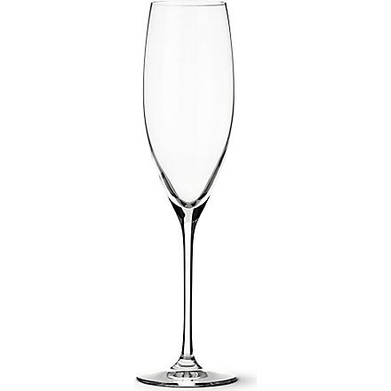 DARTINGTON Wine Master crystal Champagne glass