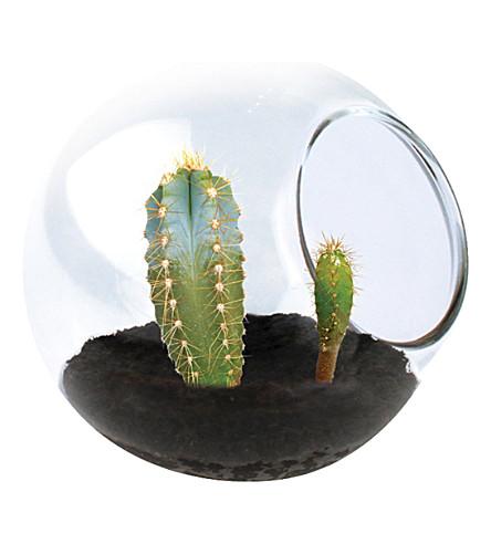 TOBAR Tiny cactus mixed glass terrarium