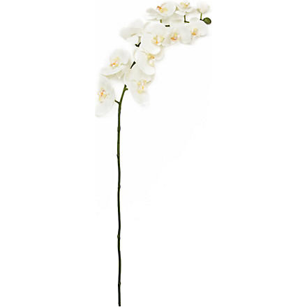 SIA HOME FASHION Orchid Phalenopsis in white