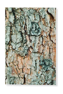 Woodpecker Pine small plain notebook 14cm