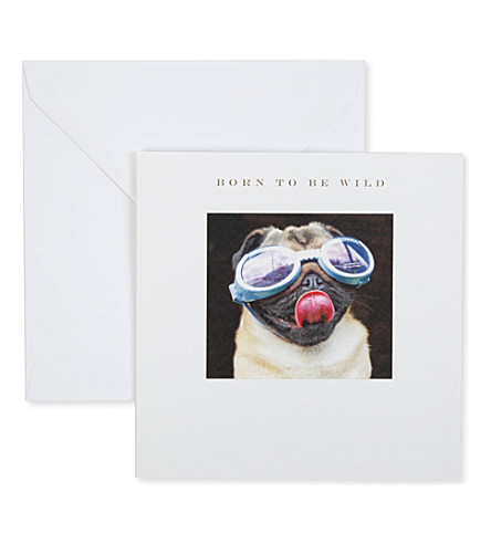 SUSAN O'HANLON Born To Be Wild Pug In Goggles card