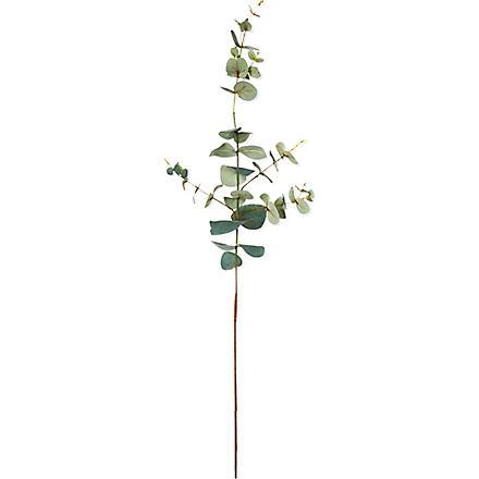 SIA HOME FASHION Eucalyptus stem