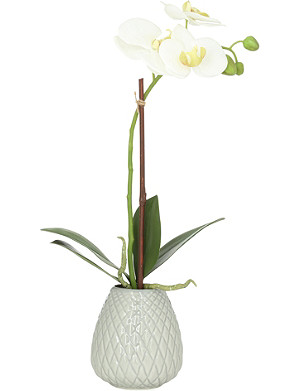 SIA HOME FASHION Phalaenopsis vase