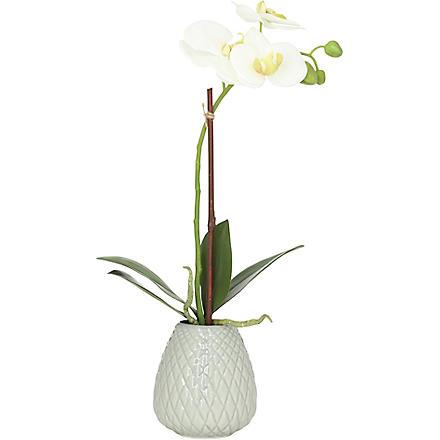 SIA HOME FASHION Phalaenopsis vase