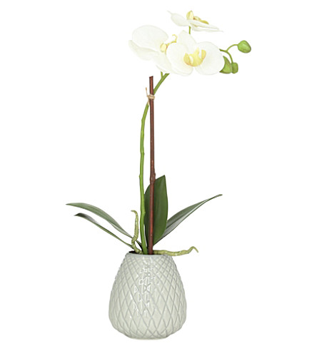 Sia Home Fashion Phalaenopsis Vase Selfridges