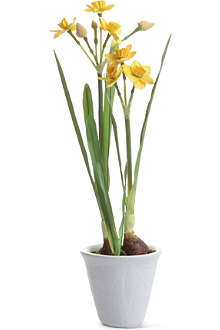 SIA HOME FASHION Narcissus potted plant