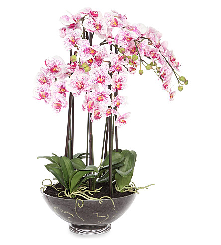 sia home fashion phalaenopsis orchid potted plant. Black Bedroom Furniture Sets. Home Design Ideas