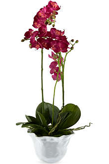 SIA HOME FASHION Phalae potted faux orchid