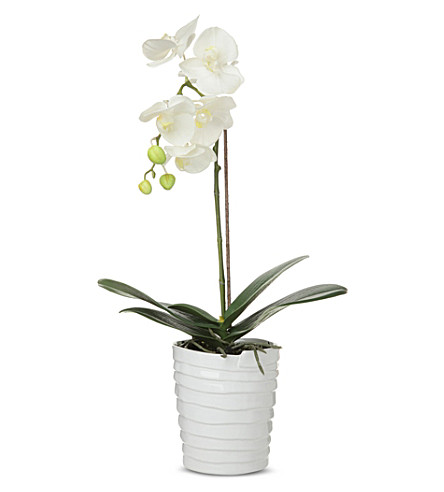 sia home fashion phalaenopsis orchid in pot 54cm. Black Bedroom Furniture Sets. Home Design Ideas