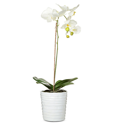 SIA HOME FASHION Phalaenopsis orchid in pot 70cm