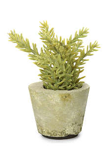 SIA HOME FASHION Sedum potted plant 11cm