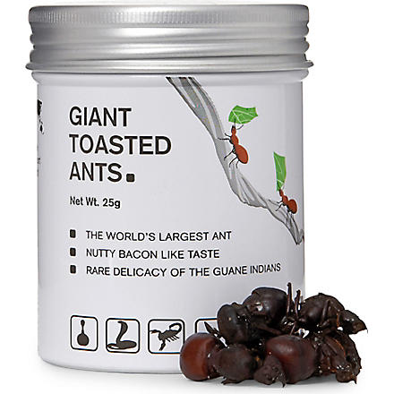 EDIBLE Giant toasted ants 25g