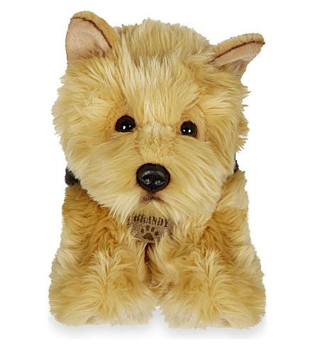KEEL Brandy Cairn terrier puppy 35cm