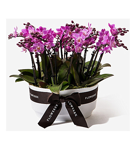 FLOWERBX FOR SELFRIDGES Mini orchid planter