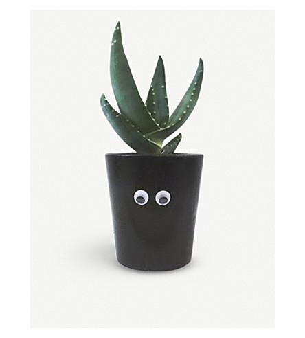 BARRY THE CACTUS Bob googly-eyed concrete plant and pot 5cm