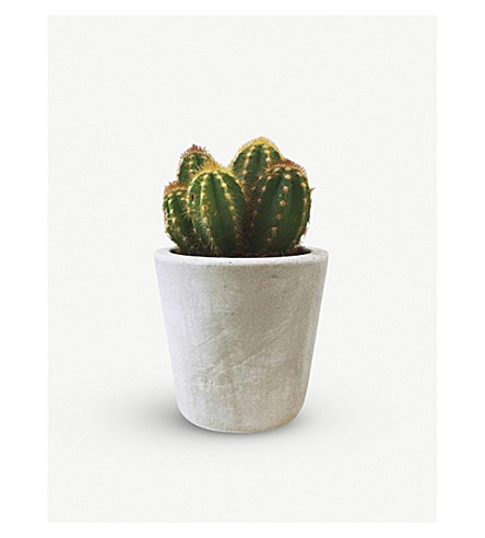 BARRY THE CACTUS Cement pot and plant 8cm