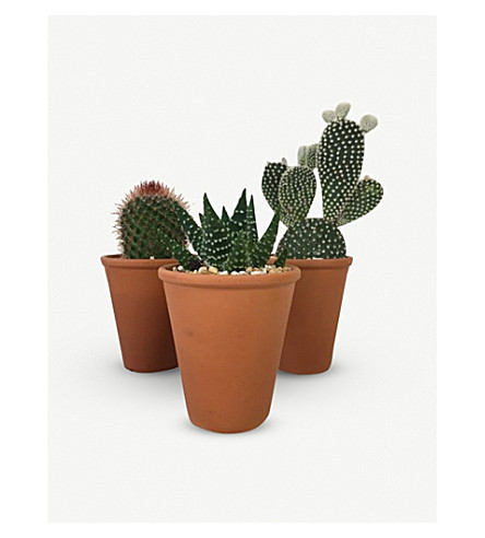 BARRY THE CACTUS Terracotta clay pot and plant 3 x 12cm