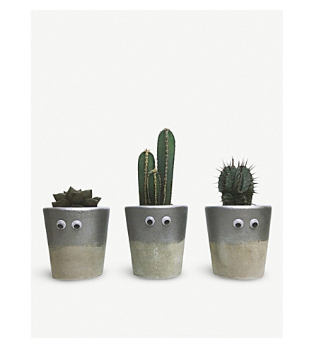 BARRY THE CACTUS Dipped metallic ceramic pot and plant 10cm