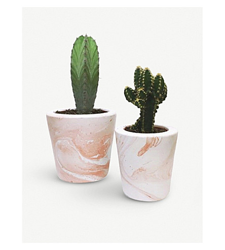 BARRY THE CACTUS Marble pot and plant 10cm