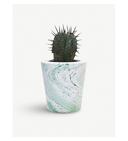 BARRY THE CACTUS Marble pot and plant 8cm