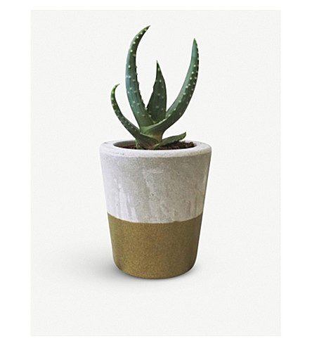 BARRY THE CACTUS Dipped metallic ceramic pot and plant 8cm