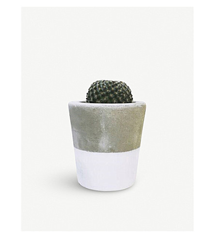BARRY THE CACTUS Dipped cement pot and plant 8cm