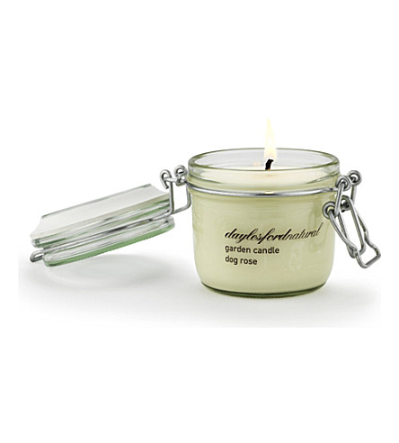 DAYLESFORD Dog Rose medium jar candle