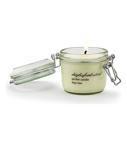 DAYLESFORD Dog Rose medium jar candle