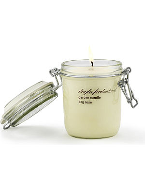 DAYLESFORD Dog Rose large jar candle