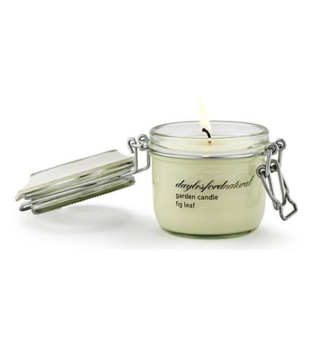 DAYLESFORD Fig Leaf medium jar candle