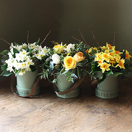 THE REAL FLOWER COMPANY Scented Spring Narcissi Rose Hat Box Trio