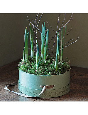 THE REAL FLOWER COMPANY Scented narcissi hat box