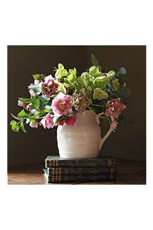THE REAL FLOWER COMPANY Spring hellebore jug arrangment
