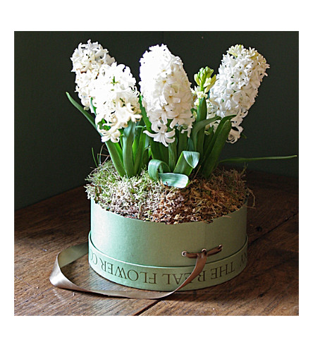 THE REAL FLOWER COMPANY Spring hyacinth hat box arrangement