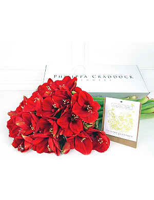 PHILIPPA CRADDOCK Deep red amaryllis & bulbs box of 6