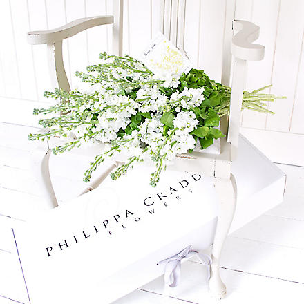 PHILIPPA CRADDOCK 20 pure white garden stocks & bulbs