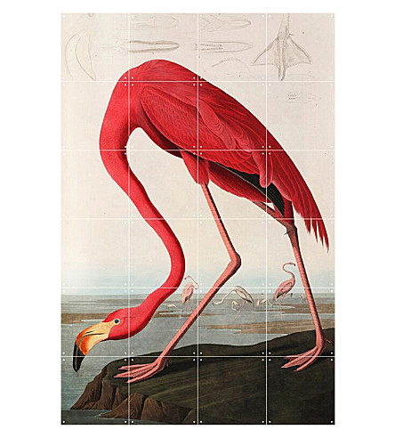 IXXI American Flamingo wall print small