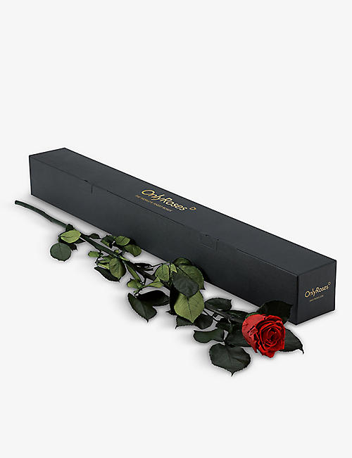 ONLY ROSES: Only Roses Infinite Statement Scarlet rose