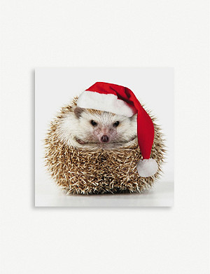 THE GREAT BRITISH CARD COMPANY Hedgehog Christmas greetings card pack of eight 9.9cm x 9.9cm