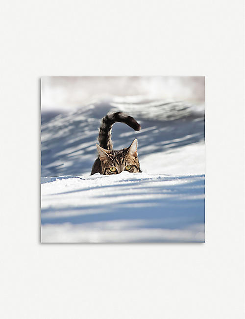 THE GREAT BRITISH CARD COMPANY Cats in the snow greetings card